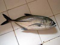 Maliputo Fish-Batangas Food