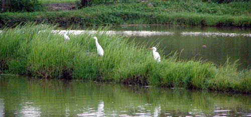 Bird Watching - Prawn Farm Lemery