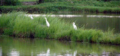 Bird Watching - Prawn Farm Lemery
