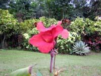 Caleruega Flower