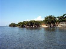 Lago de Oro Mangrove