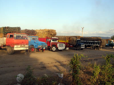 Sugarcane trucks line up at the CADP grounds in Nasugbu