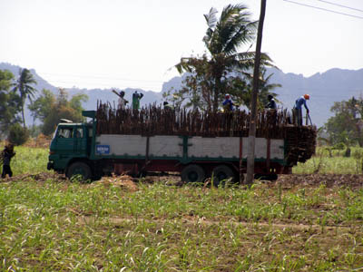 Sugarcane workers load cane to a truck